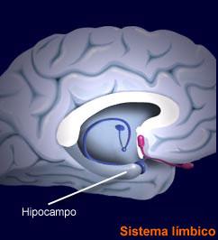 hippocampus.jpg