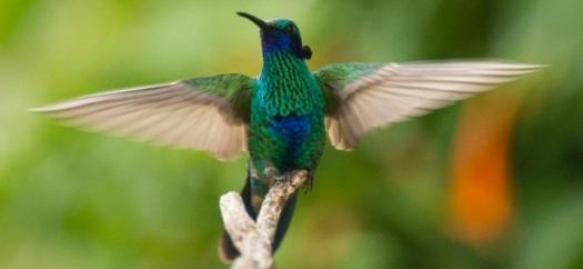 colibri-el-jardin-encantado